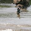 Kingfisher <br /> Creve Coeur Lake
