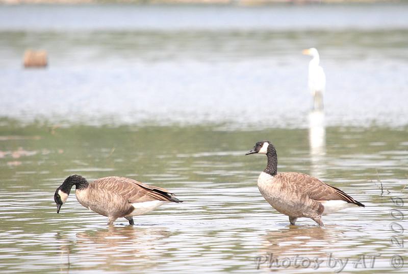 Busch Wildlife CA<br /> Lake 33
