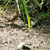 Busch Wildlife CA<br /> Lake 6