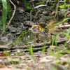 Unknown<br /> Busch Wildlife CA<br /> Lake 6