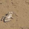 Busch Wildlife CA