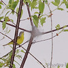 Nashville Warbler <br /> Castlewood State Park