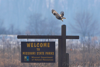 """Rough-legged Hawk <br /> Edward """"Ted"""" and Pat Jones-Confluence Point State Park <br /> <br /> No. 182 on my Lifetime List of Bird Species <br /> Photographed in Missouri."""
