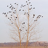 Riverlands Migratory Bird Sanctuary <br /> 2007-01-03