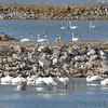 Riverlands Migratory Bird Sanctuary <br /> 2007-01-26