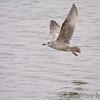 Riverlands Migratory Bird Sanctuary <br /> 2007-01-24
