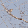 Riverlands Migratory Bird Sanctuary <br /> 2/11/07