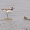 Killdeer<br /> Riverlands Migratory Bird Sanctuary