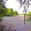 Creve Coeur Marsh <br /> 7-26-2008