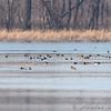 Horseshoe Lake Illinois