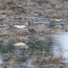 Notice the other bird (Plover) in the reflection <br /> Missouri Bottom Road