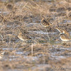 Count the Snipe <br /> Missouri Bottom Road