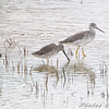 Dowitcher <br /> Missouri Bottom Road