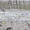 Sanderling <br /> B.K. Leach Memorial Conservation Area