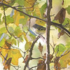 Blue-headed Vireo <br /> Bridgeton, Mo.<br /> 2008-10-28