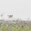 Dowitcher <br /> Hayford Road, St Charles County
