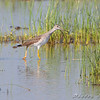 Clarence Cannon National Wildlife Refuge