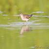 East side of Heron Pond Trail <br /> Riverlands Migratory Bird Sanctuary