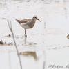 North end of Heron Pond <br /> Riverlands Migratory Bird Sanctuary