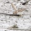 South end of Heron Pond <br /> Riverlands Migratory Bird Sanctuary