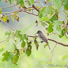 Two Pecan Trail <br /> Riverlands Migratory Bird Sanctuary