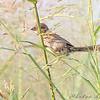 Heron Pond Trail, West side <br /> Riverlands Migratory Bird Sanctuary