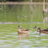 Wood Ducks <br /> BK Leach