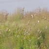 "Heron Pond <br> Riverlands Migratory Bird Sanctuary <br>  <font color=""blue""> See very large size </font> <a href=""/photos/623309562_oSdzU-X3.jpg"" target=""_blank""> <font color=""blue"">  Here</font></a>"