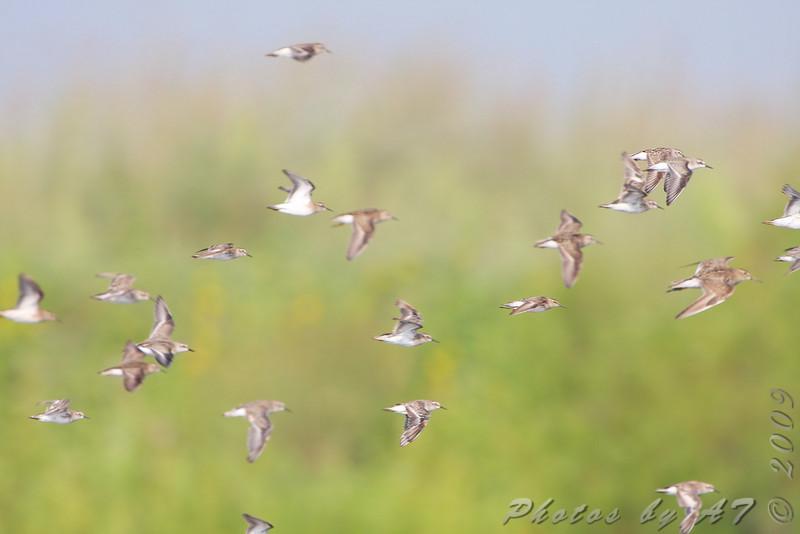 "Heron Pond <br> Riverlands Migratory Bird Sanctuary <br>  <font color=""blue""> See very large size </font> <a href=""/photos/622828994_yjkTj-X3.jpg"" target=""_blank""> <font color=""blue"">  Here</font></a>"