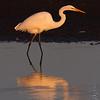 Great Egret <br /> Cora Island Road