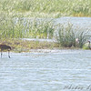 Sandhill Cranes and Great Blue Heron <br /> Eagle Bluffs Conversation Area