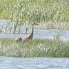 Sandhill Cranes <br /> Eagle Bluffs Conversation Area