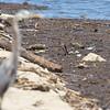 Count the shore birds <br /> Riverlands Migratory Bird Sanctuary