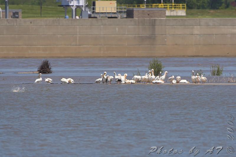 Parking lot <br /> Riverlands Migratory Bird Sanctuary