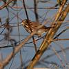 South Heron Pond parking lot <br /> Orton Road <br /> Riverlands Migratory Bird Sanctuary