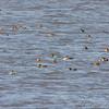 From observation ramp <br /> Ellis Bay <br /> Riverlands Migratory Bird Sanctuary