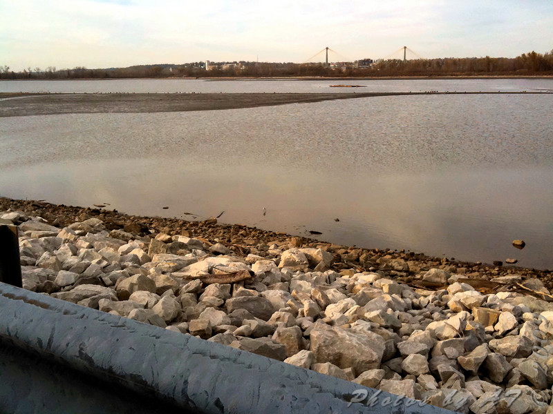 American Avocet <br /> Ellis Bay across from Heron Pond <br /> Riverlands Migratory Bird Sanctuary <br /> Photo taken with iPhone
