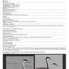 Clark's Grebe Documentation submitted to <br /> Missouri Rare Bird Committee (MRBC)