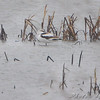 American Avocet  <br /> Heron Pond <br /> Riverlands Migratory Bird Sanctuary<br /> Latest known date so far for this species in <br /> Missouri is November 19, 2007 <br /> Will probably be around a few more days <br /> because of the weather though.