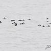 Creve Coeur lake