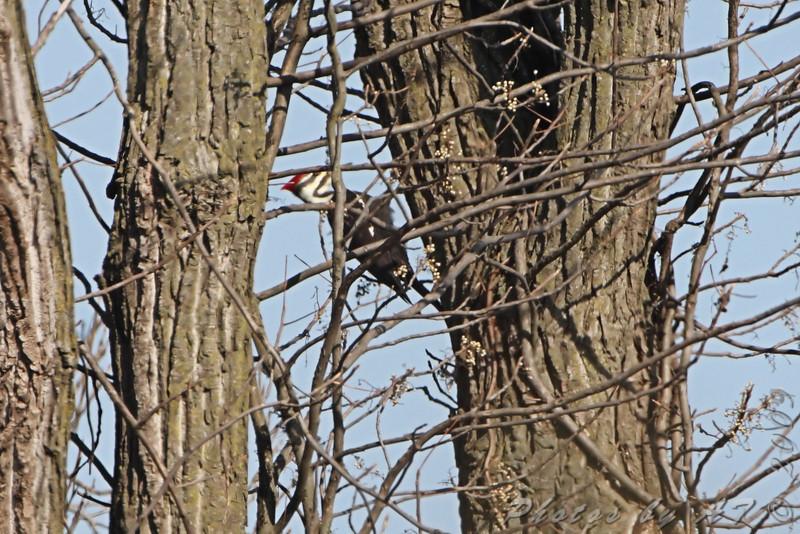 Blue Grosbeak Trail <br /> Weldon Spring Conservation Area