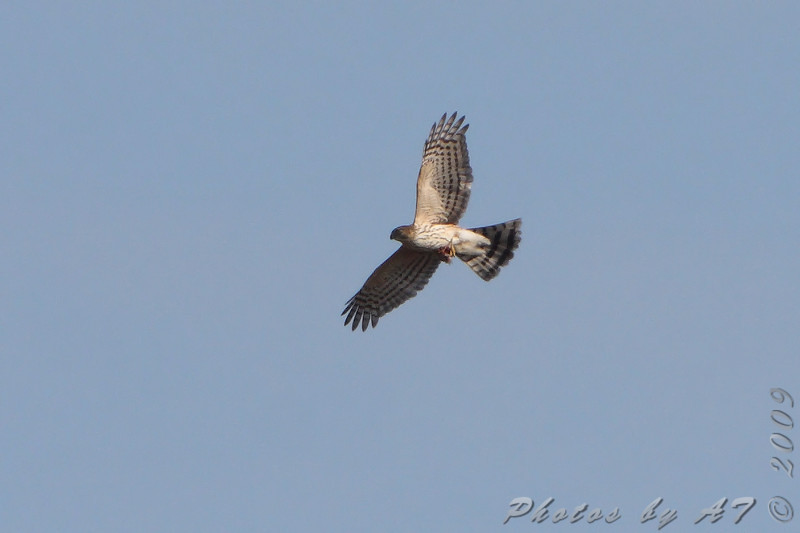 High over the Blue Grosbeak Trail <br /> Weldon Spring Conservation Area