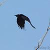 Fish Crow <br /> Castlewood State Park