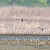 BK Leach Conservation Area