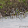 Wise Road <br /> Riverlands Migratory Bird Sanctuary