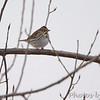 Savannah Sparrow <br /> Confluence Point State Park