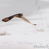Short-eared Owl <br /> Heron Pond <br /> Riverlands Migratory Bird Sanctuary