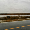 75-100 Avocets <br /> along Hwy 27  <br /> Louisiana<br /> Taken with SmugShot on my iPhone