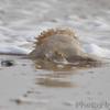 Jellyfish <br /> Boca Chica <br /> Rio Grande Valley Texas