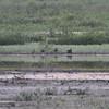 Thompson River Wetland